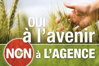 Référendum auprès des producteurs de blé de consommation humaine