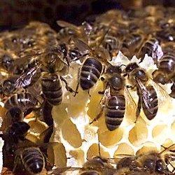 Fêtons nos reines avec la Journée de l'abeille!