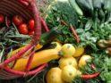 FORUM PERMANENT : en route vers l'autonomie alimentaire