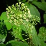 Identification et transformation de plantes médicinales (1 jour)