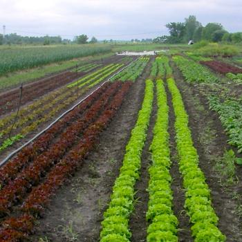 Formation sur la production de semences