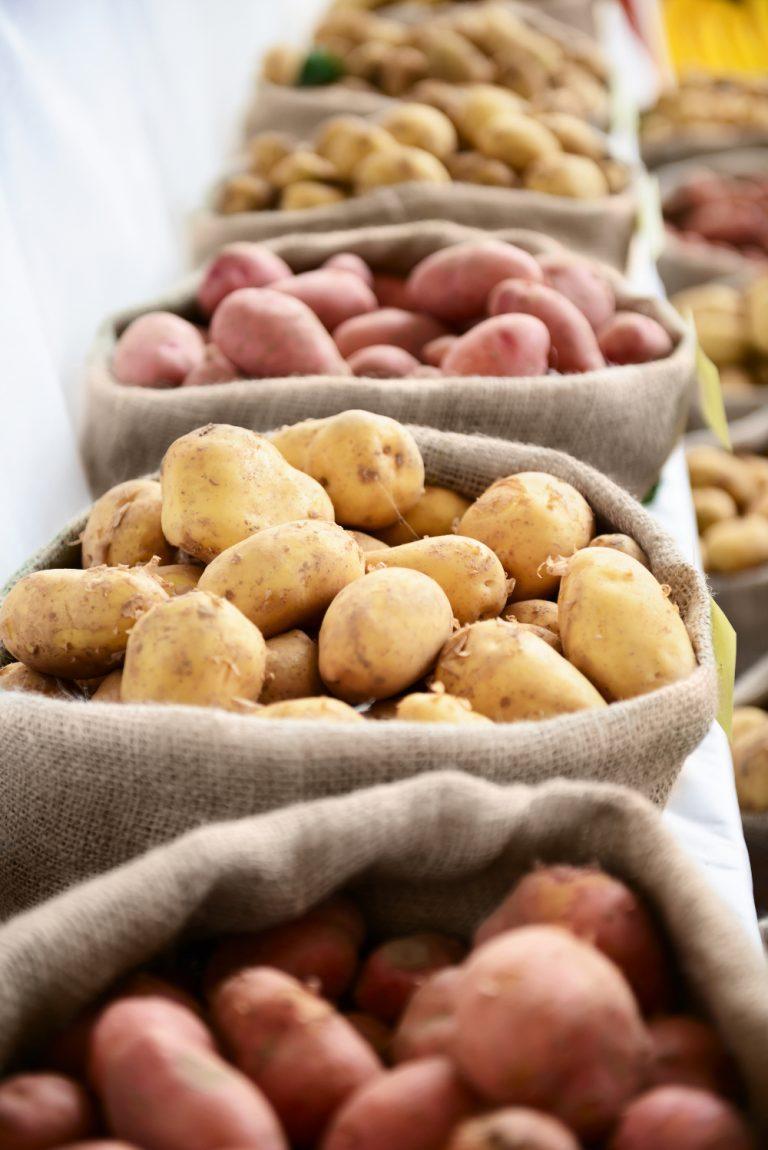 Pommes de terre de semence biologiques