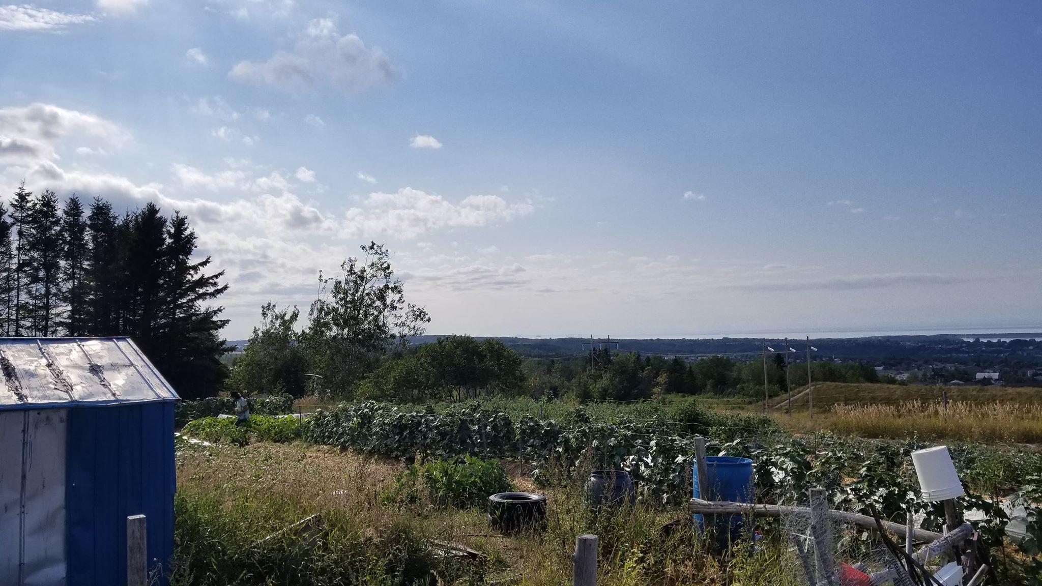 Sur la question de l'ALÉNA et de la situation paysanne au Québec