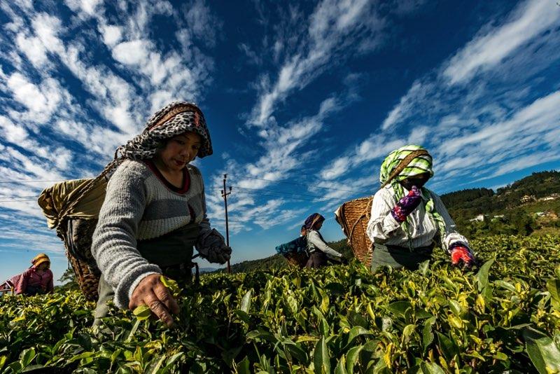 L'injustice des conditions de travail dans le secteur agricole Travailleuse-eurs étrangère-ers temporaires